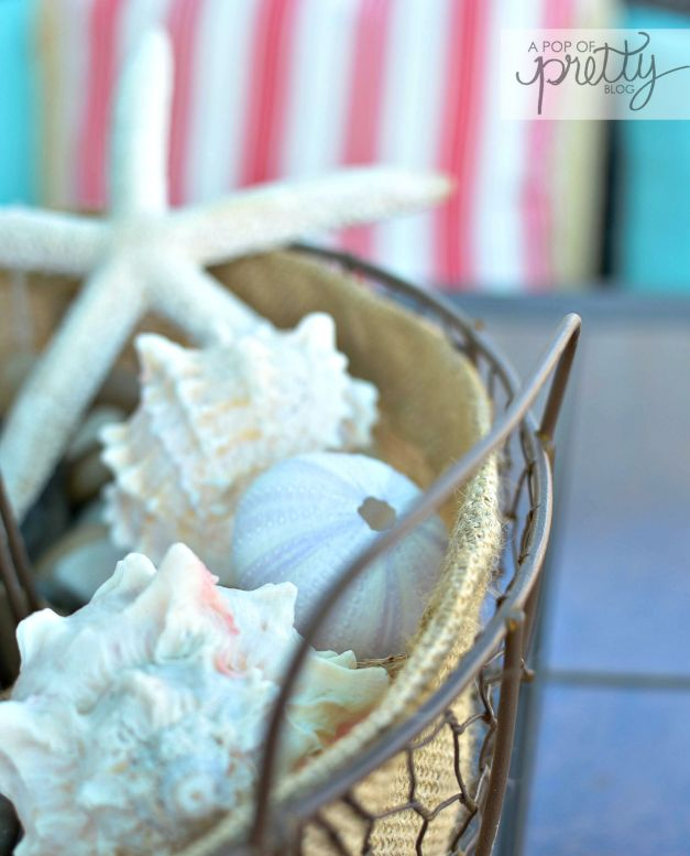 nautical decor - shells
