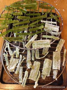 Candied Angelica translucent & sugar coated to oven for drying at low temperature