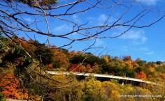 Gorgeous Hamilton Escarpment, Fall Mushroom Hunt