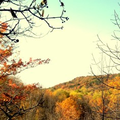 Wild mushroom hunting in such memorable Fall beauty.