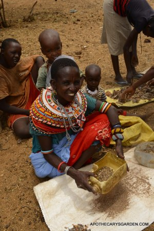 Samburu women sorting Frankincense Neglecta