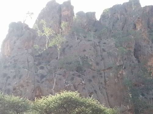 maydi-trees-2