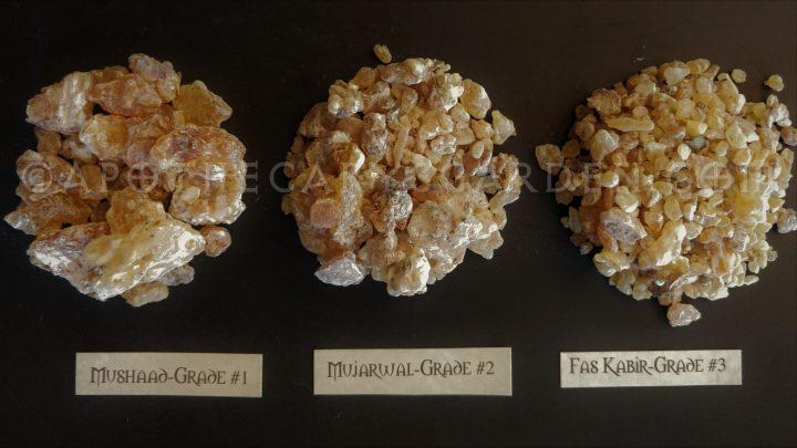 MAYDI-Frankincense Frereana-Somalia, www.apothecarysgarden.shop