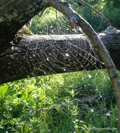 Princess Point Spiderweb