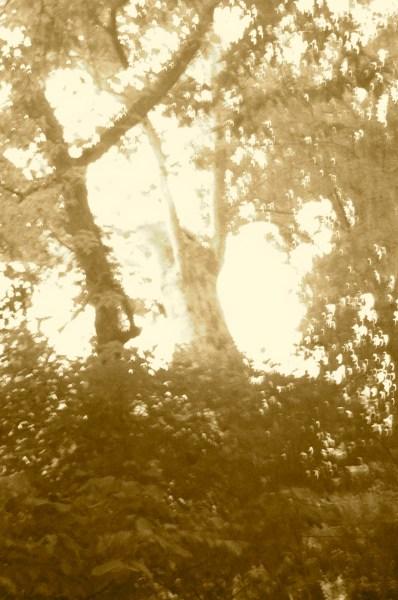 Arboreal Scream