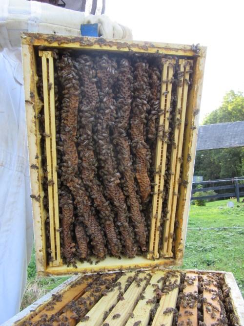 super full of bees