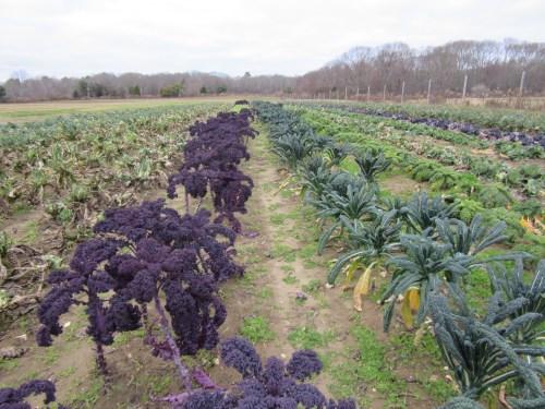 Winter crops still going