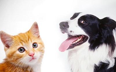 Teken bij je huisdier? Weg ermee!