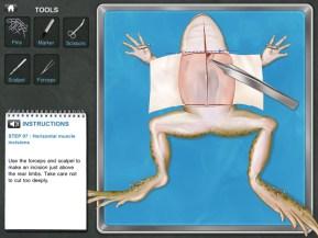 frogd-05