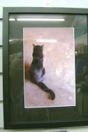 135 - V Biehl - cat photo