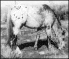 Chief Navajo F-1970