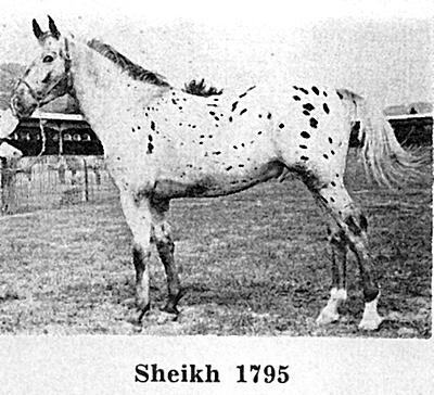 sheikhf1795