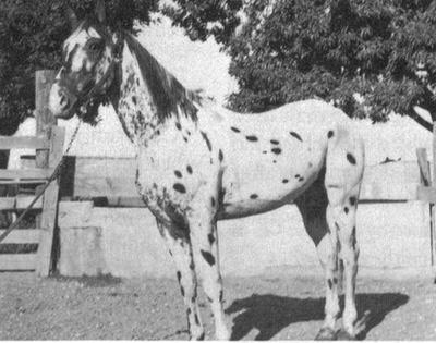 costasspecksf1853