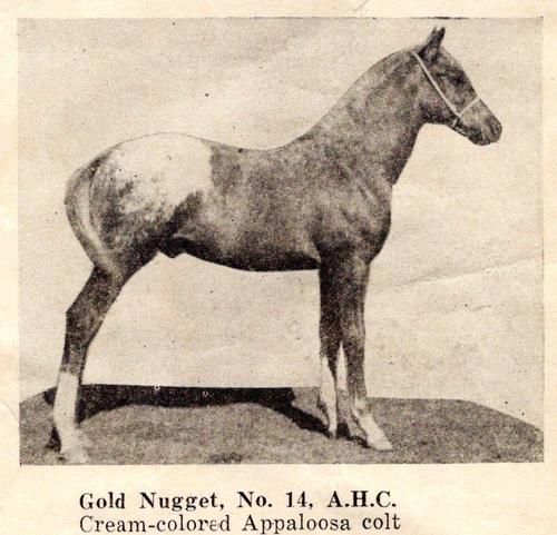 goldnuggetf14