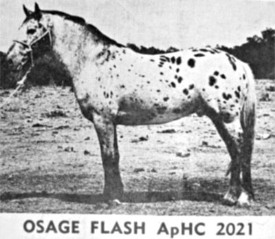 Osage Flash