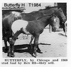 butterflyht1984
