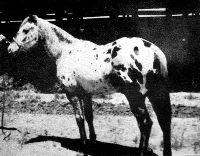osagearrow1884b