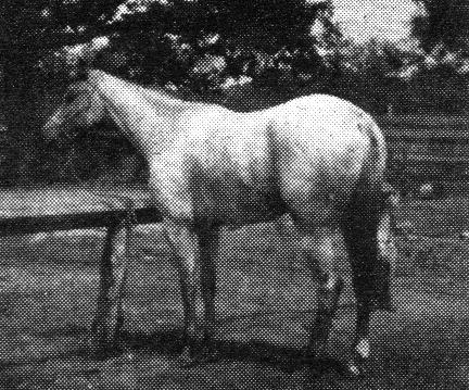 weimanshoboeagle1863