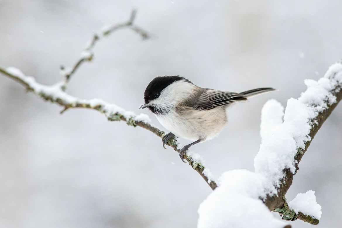 Fågelguiden identifierar över 700 fågelläten och arter