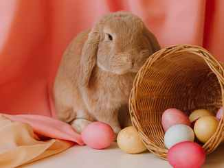 colored eggs in a basket beside a bunny