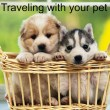 How to Transport your Friendly Pets When Moving