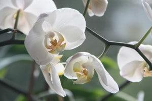 orchidée gite montelimar
