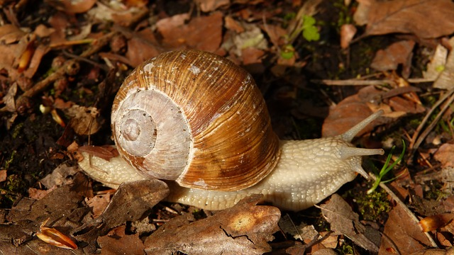 ferme escargots montelimar drome ardèche
