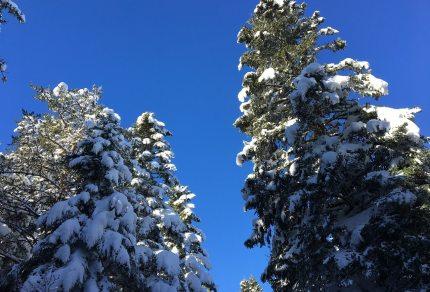 sapins pal ardeche neige raquettes