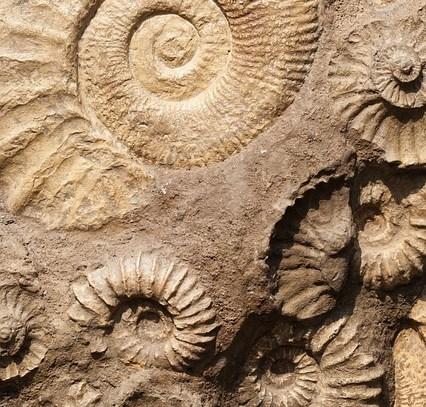 Site de fossiles Ardèche