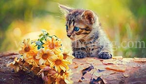 FLOWERS KITTEN EARS