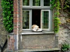 Relaxte hond