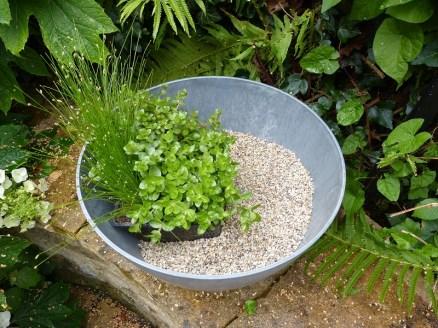 De vijverbak is gevuld met substraat en een bakje planten.