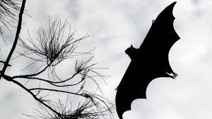 Pipistrelli e COVID-19: il rischio di volare alto