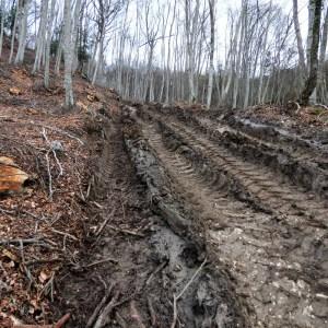Appennino Ecosistema denuncia la Regione alla Commissione Europea per danni permanenti ad habitat prioritario