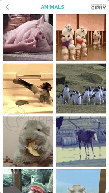 Añadir GIFs a fotos GIFX 3
