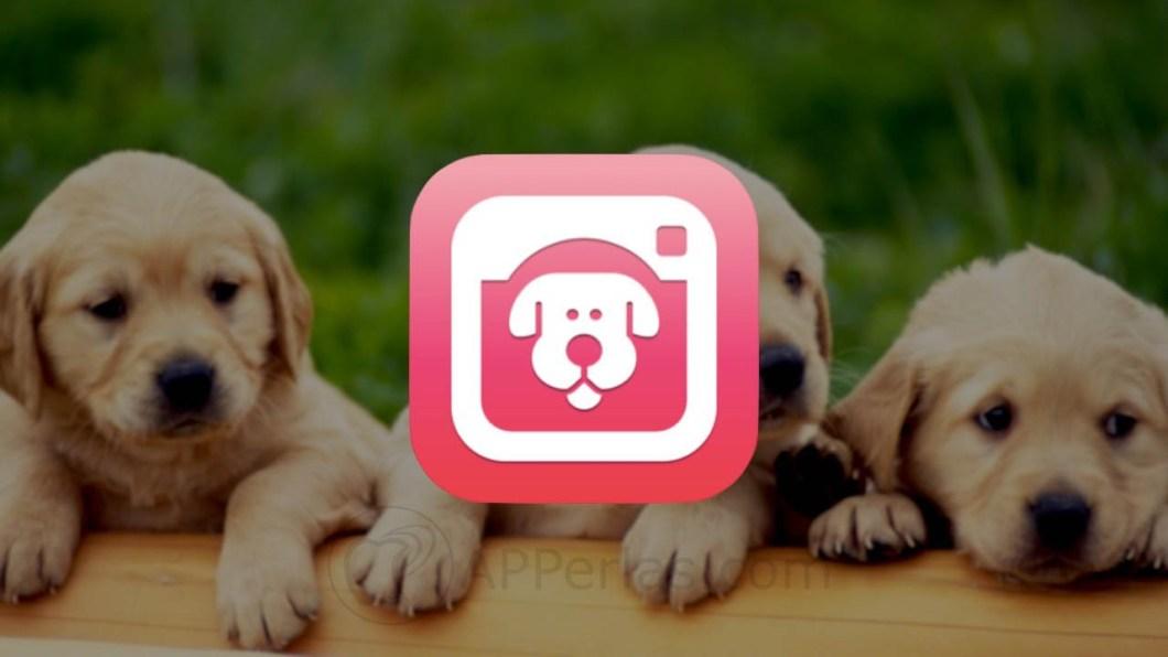 app para sacar fotos a perros 1