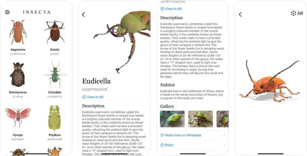 Todo tipo de información sobre insectos