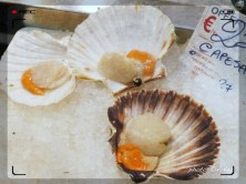 Capesante - Scallops :: Take Five - Food Shopping in Rome at The New Esquilino Market - Seafood Stalls | photo: ©ArKey