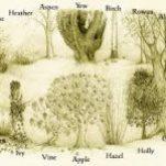 grove