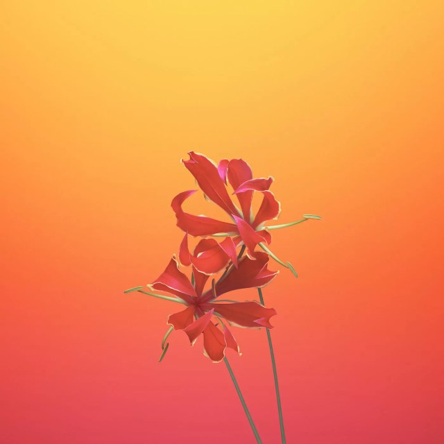 ios_11_gm_wallpaper_flower_gloriosa.jpg