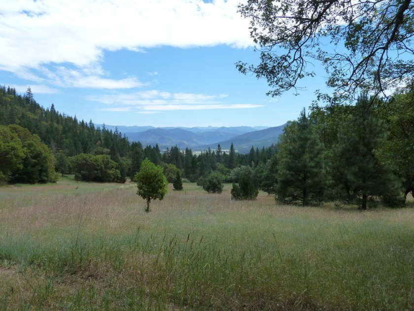 ANN worked to successfully secure a motorized vehicle closure in these large meadows on China Gulch near Ruch, Oregon. The meadows was being badly damaged by uunauthorized OHV use.