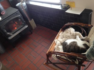 cat by the wood stove
