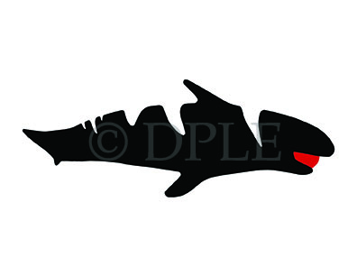 """Shark"" - Devin P.L. Edwards"