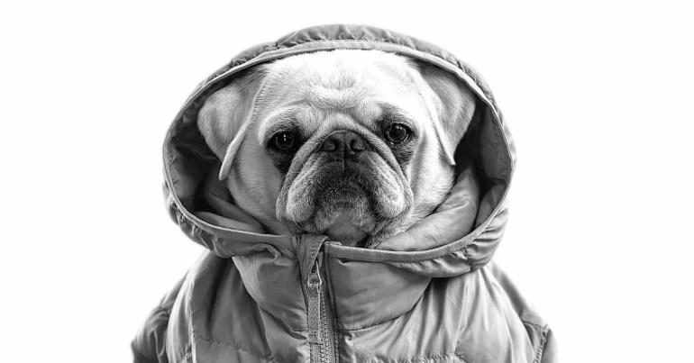 Портреты домашних животных освещают последнюю кампанию «Снимок на iPhone» и сессию «Сегодня в Apple»