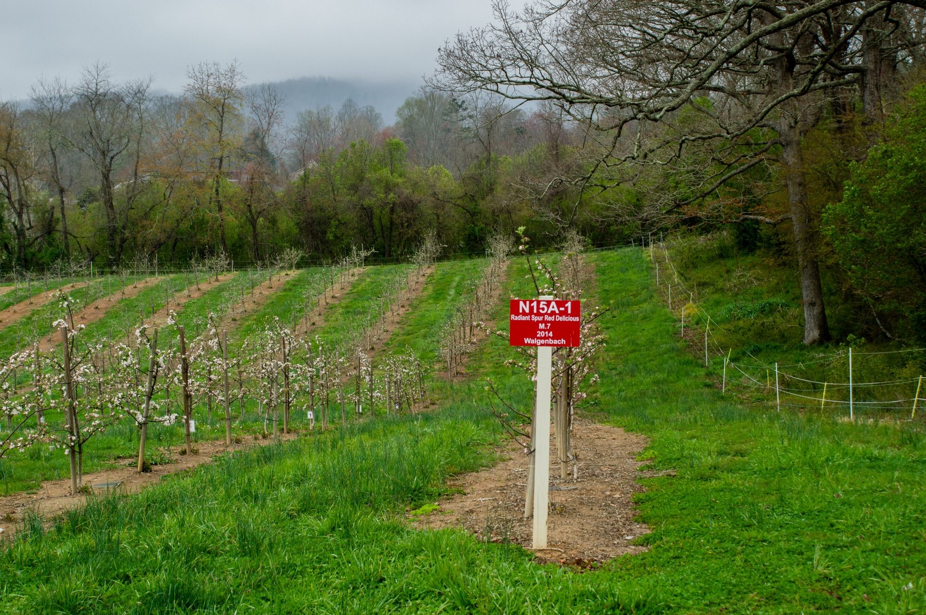 Wnc Orchard Insect Populations For April 10