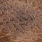 13403-Brown