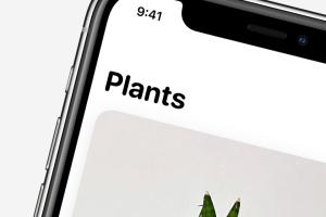 plant daddy