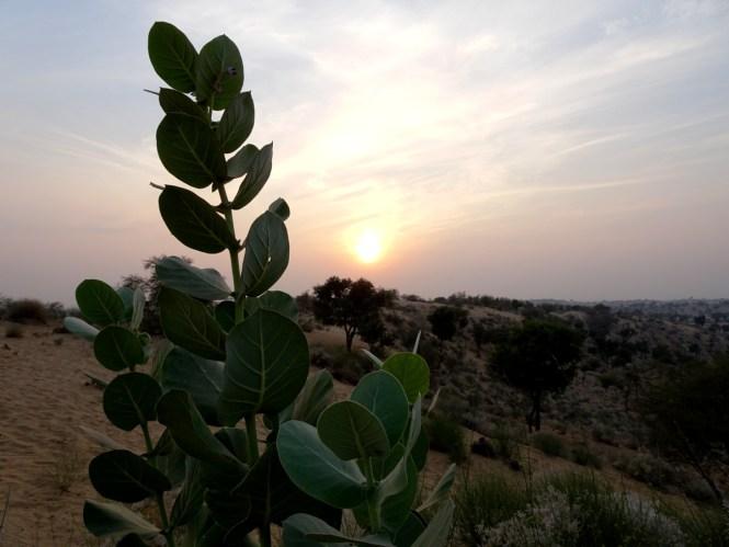 sonnenuntergang wüste jodhpur indien