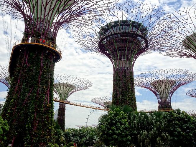 supertree grove singapur travelguide