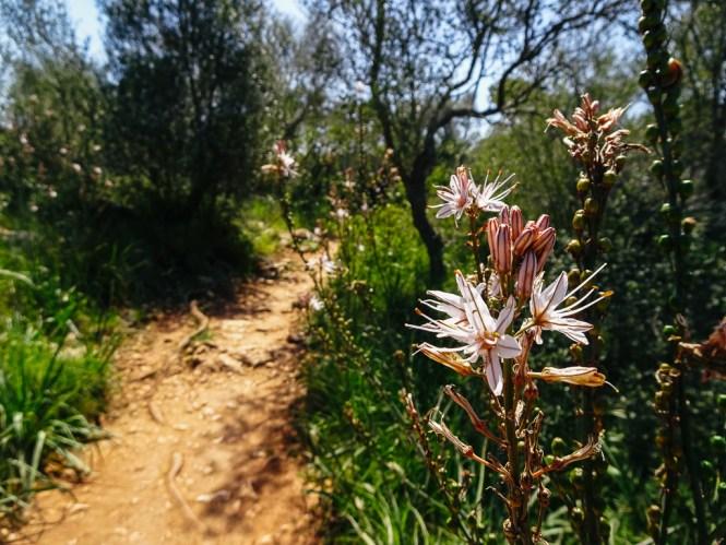 Naturpark Mondrago Mallorca Süden Travelguide